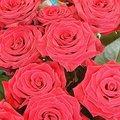 Розы | Виртуальные открытки