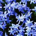 Цветы | Виртуальные открытки