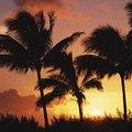 Тропики | Виртуальные открытки